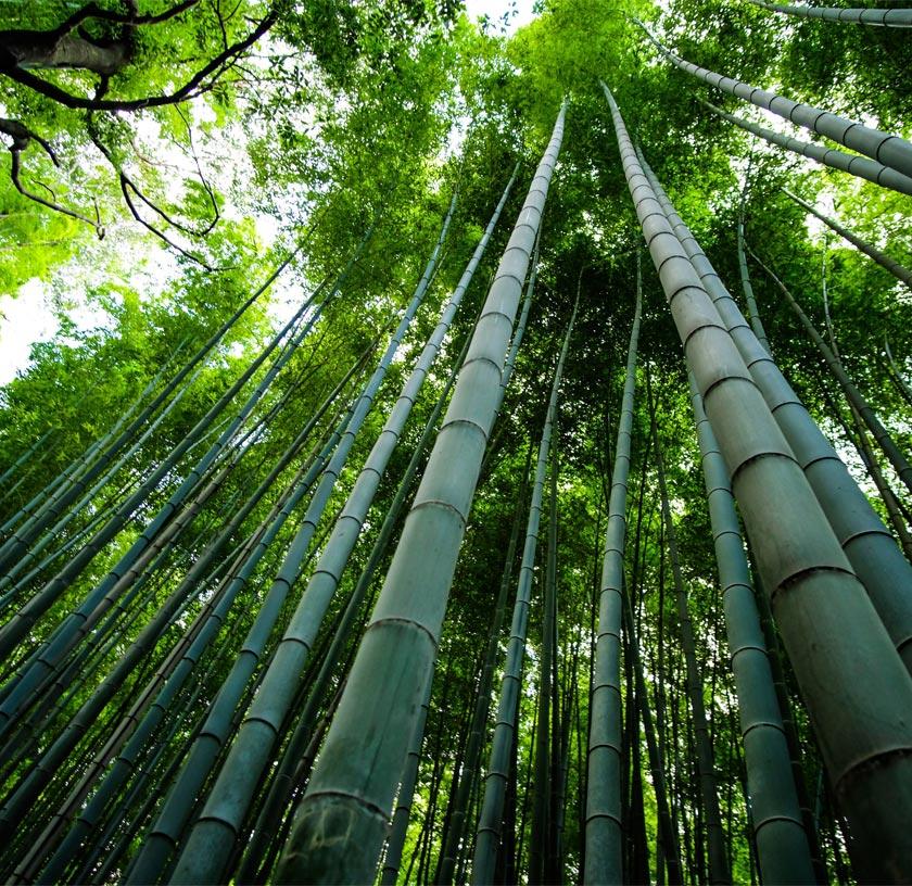 Bamboo Biopolymer